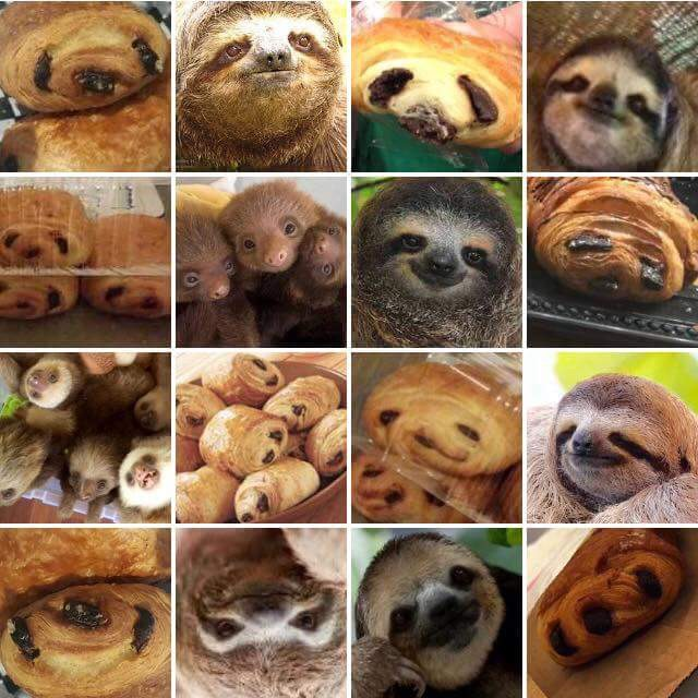 Sloth vs Pain au Chocolate