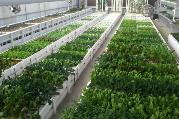 מיטות הגידול בחווה האורבנית של GrowHaus