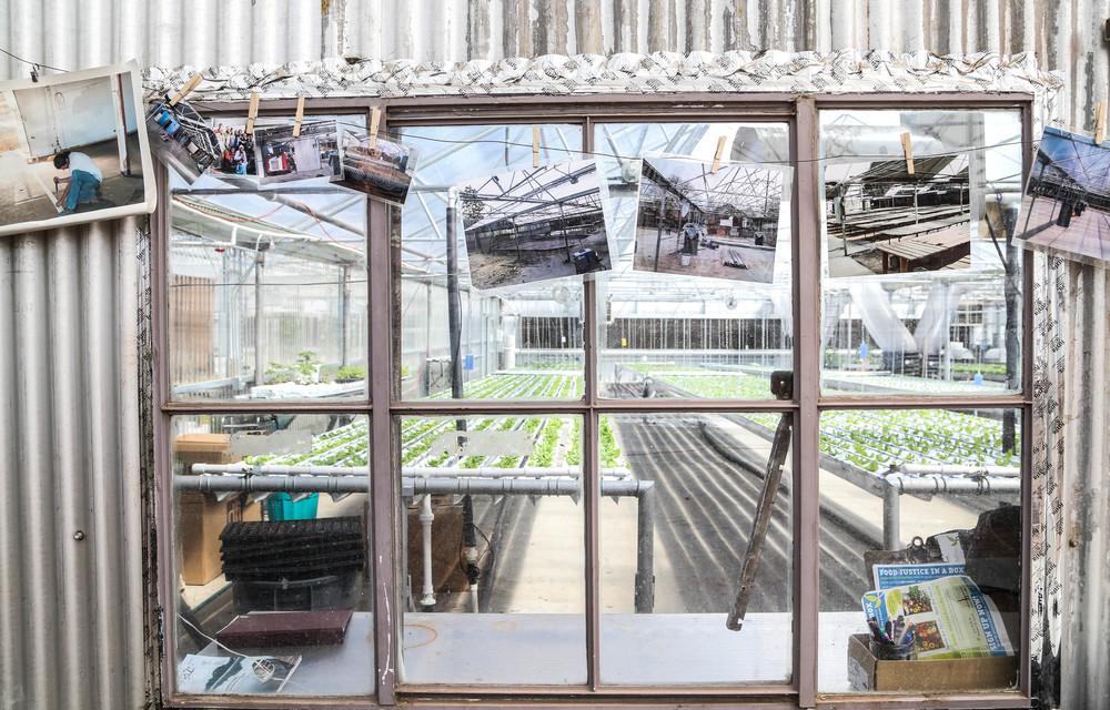 hydroponic farm