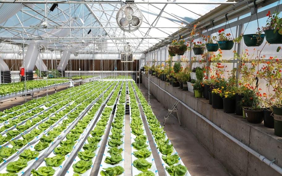 The GrowHaus חווה עירונית ללא מטרות רווח בדנבר ארה