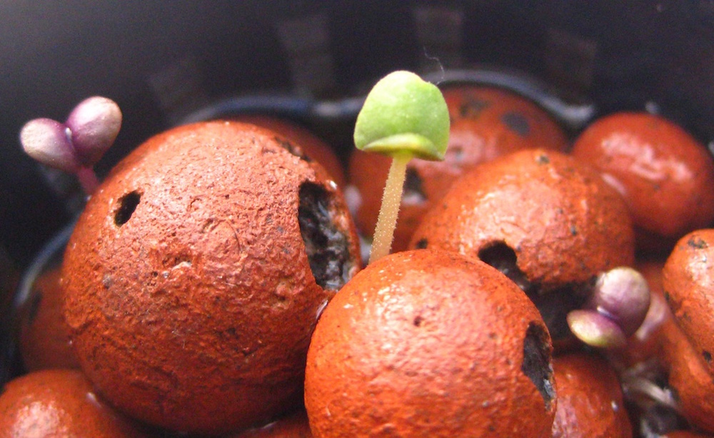 11_1-Sprout.JPG