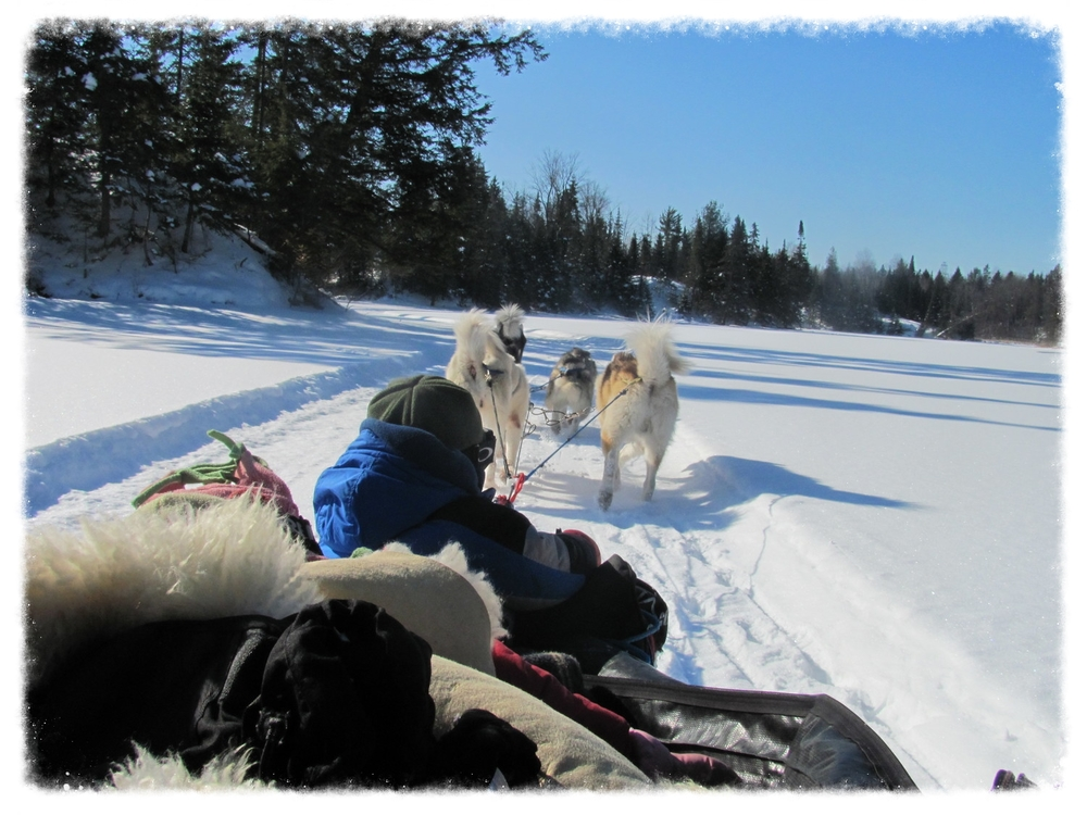 Dogsledding Reservation required