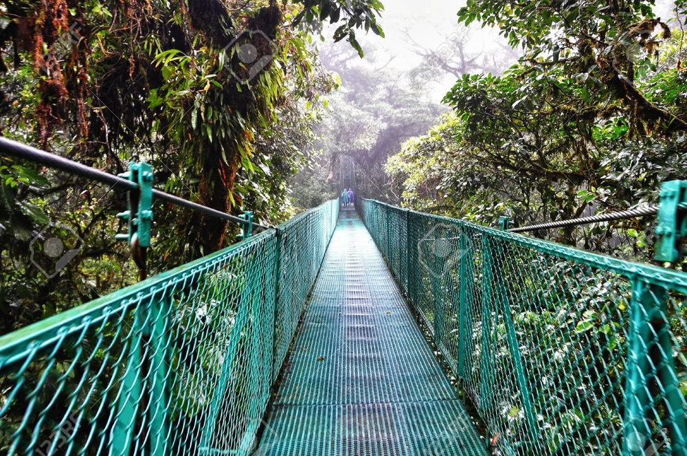 17266275-Walking-along-a-suspended-bridge-in-The-cloud-forest-of-Selvatura-Park-in-Costa-Rica-Stock-Photo.jpg