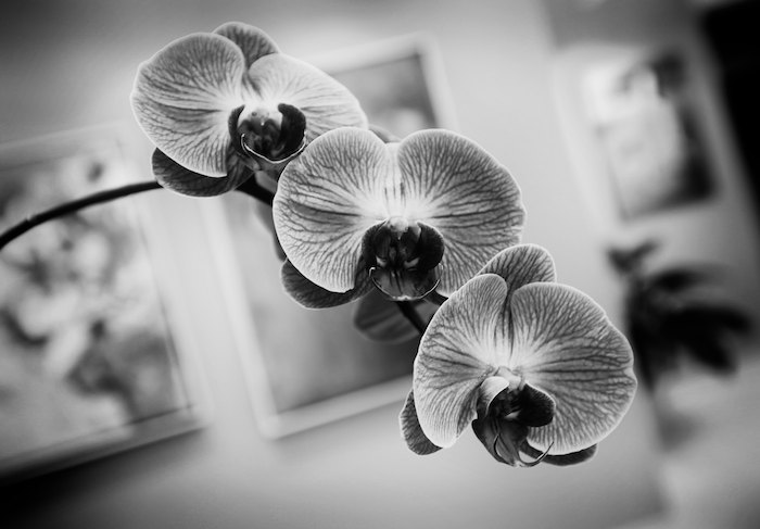 Bunch of Orchids #6