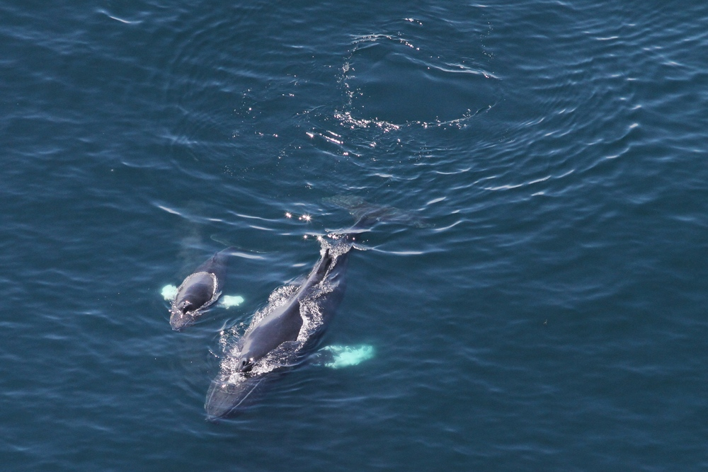 2014-05-06-humpback-whale-mom-calf-by-Christin-Khan-IMG_4825-crop.jpg
