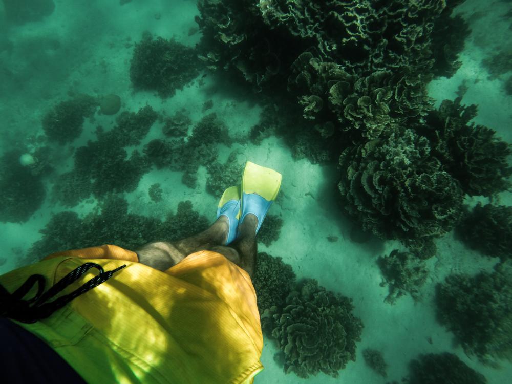 Snorks, Coral Bay