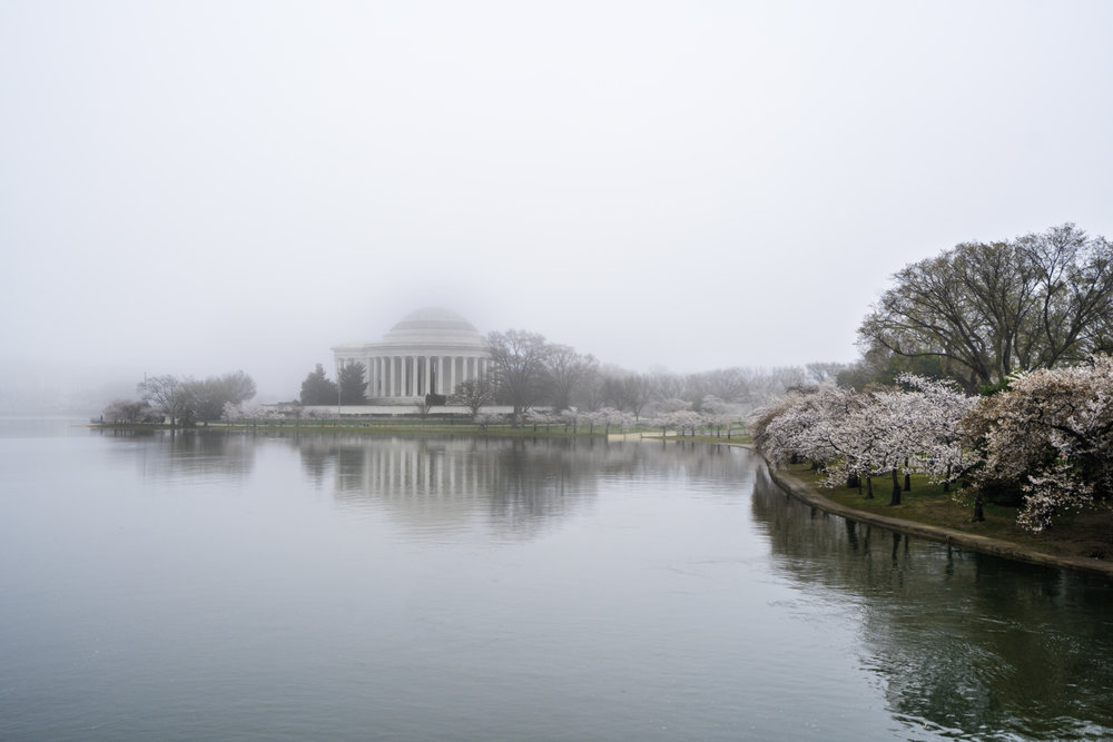 Foggy morning over the Tidal Basin