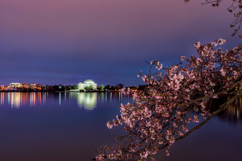 Early Blue Hour with cherry blossoms lit with a LumeCube ---- Sony A7R3 --- 6:17am -- Sony 24-240/38mm, 20sec exposure, F/8, ISO 100