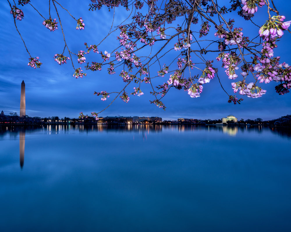 Extreme blue hour with one of my favorite subjects, the Jefferson Memorial and Washington Monument in 1 frame.  Add in some cherry blossoms lit from the LumeCube and tada!  ----  Sony A7R3 --- 6:36am -- Sony 16-35/19mm, 10 second exposure, F/16, ISO 100