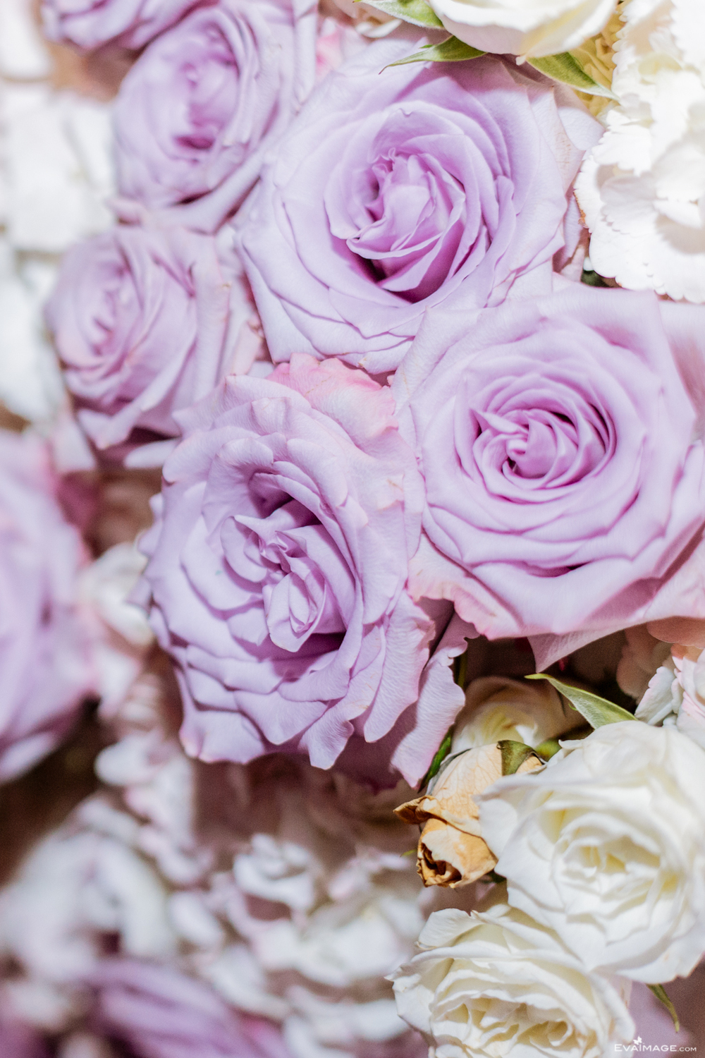 Purple Roses Toronto Florist by EvaImage Photography.jpg