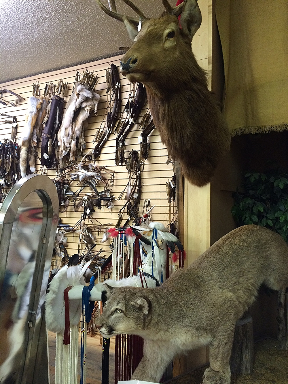 Bows, Arrows, Cougars and Elk