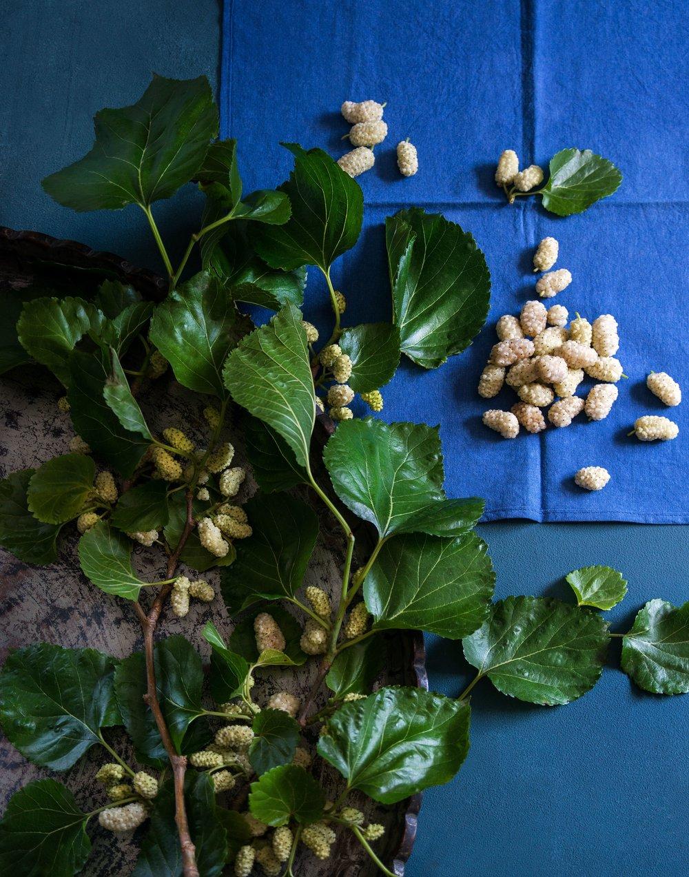 Mulberry005 (1).jpg