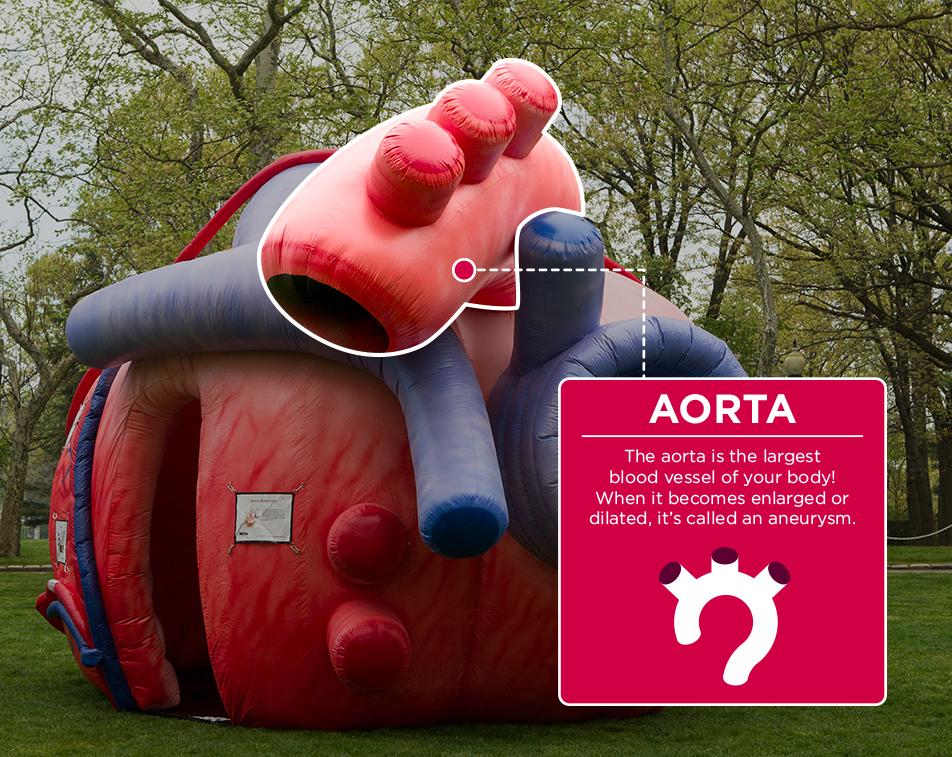 Mega_Heart_Aorta_Spotlight.jpg