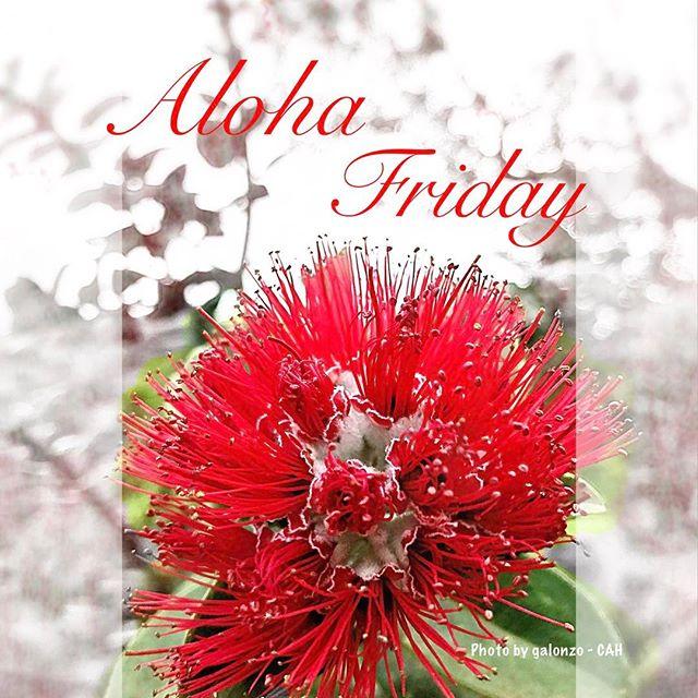 It's Aloha Friday 🌺  #CAH #luckywelivehawaii #concierge #conciergelife #livingaloha #conciergehawaii #hawaiianhospitality