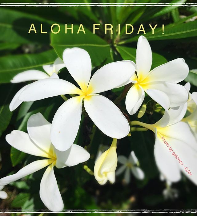 Aloha Friday! 🌺 #CAH #luckywelivehawaii #concierge #conciergelife #livingaloha #conciergehawaii #Hawaiianhospitality