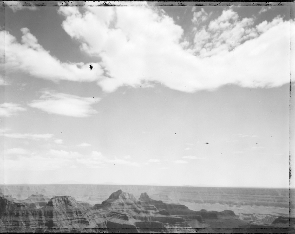 Fly, north rim, Grand Canyon, 2004
