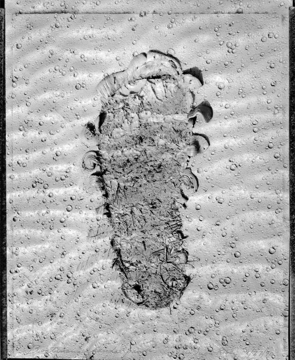 Boatman's sandal print, San Juan River, 1990
