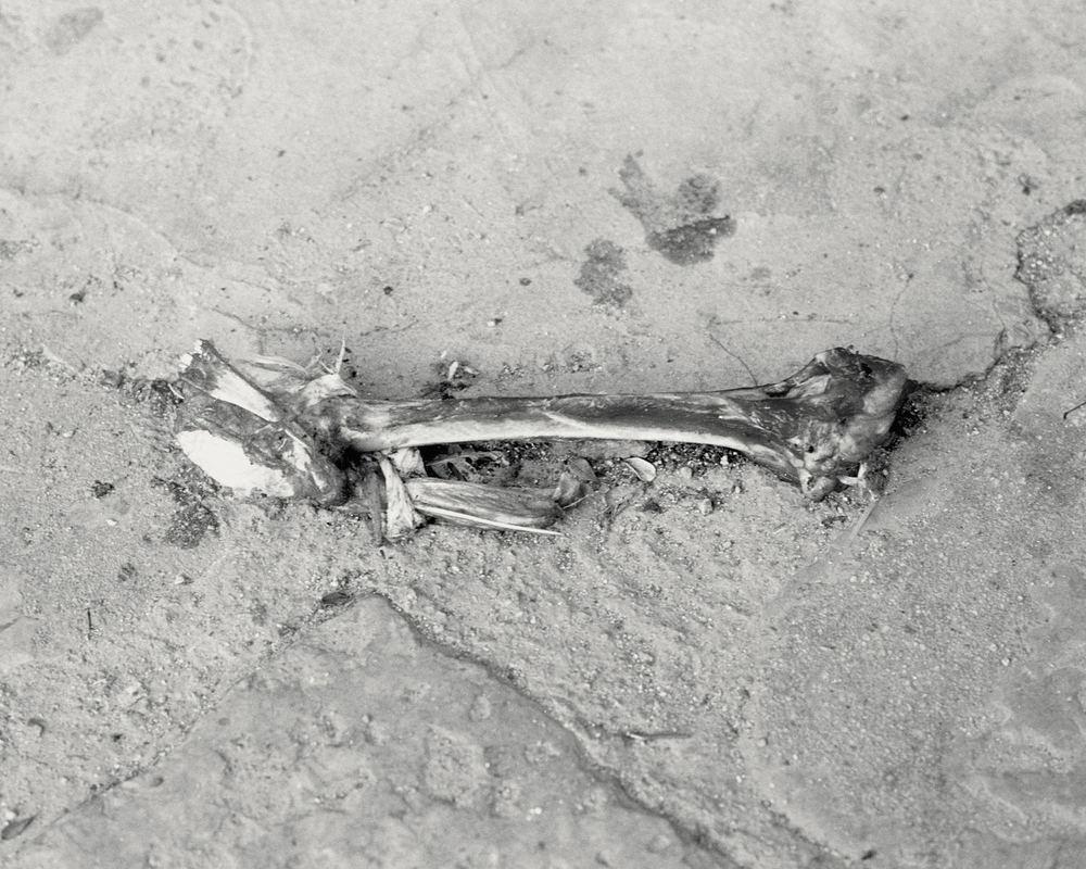 bone_palermo.jpg