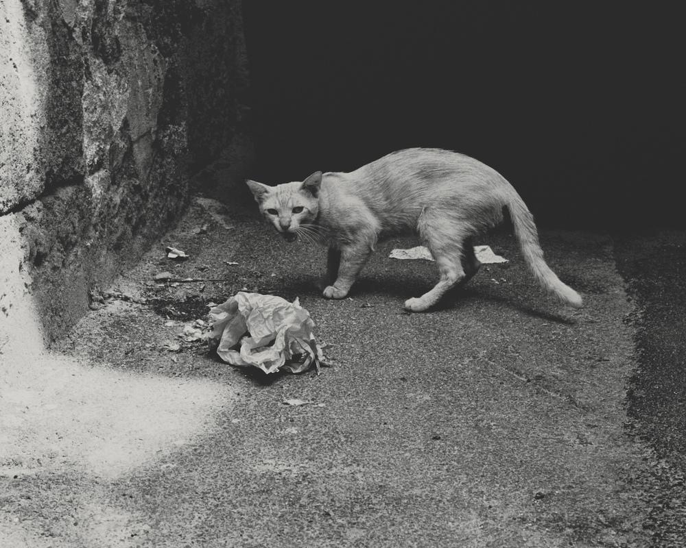 palermo_cat.jpg