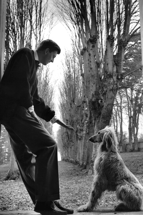 Hubert de Givenchy with his Afghan hound in 1955