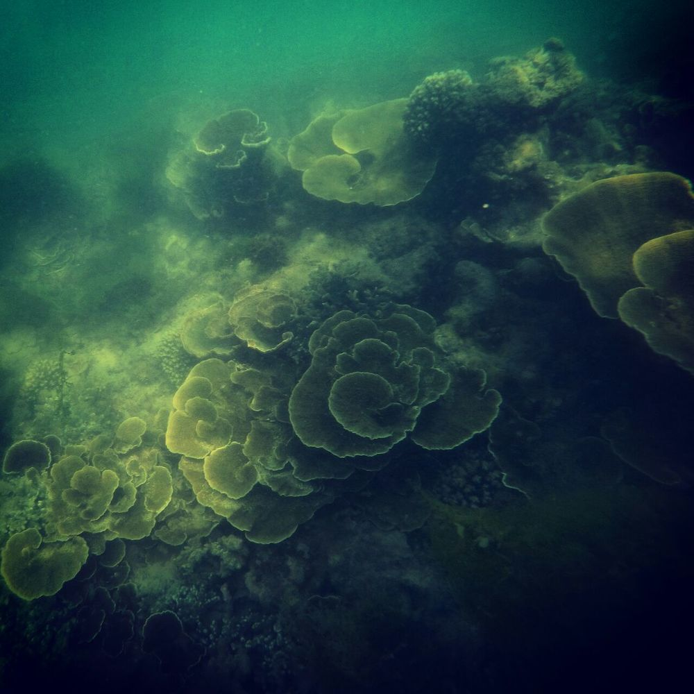 Shallow Coral Reef in the Gulf of Mannar | Rameshwaram | Tamil Nadu | India