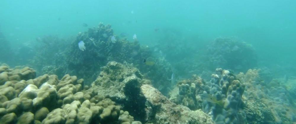 snorkelling-gulf-of-manna