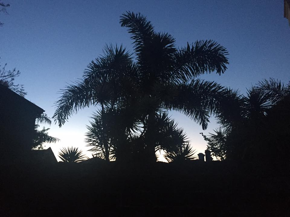 Aussie trees <3