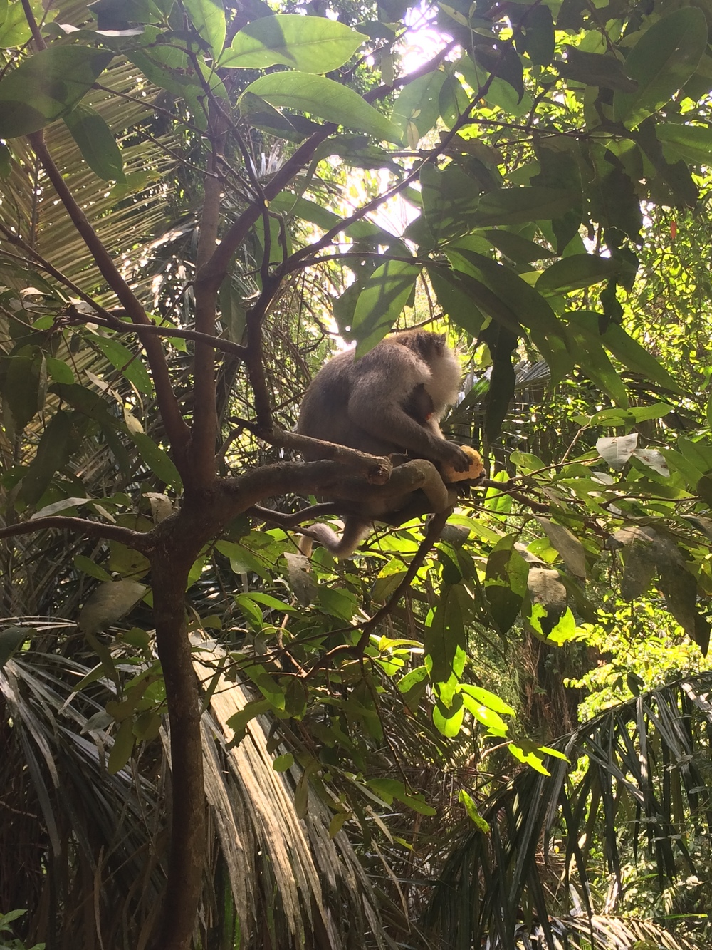 Monkeys in the forest!