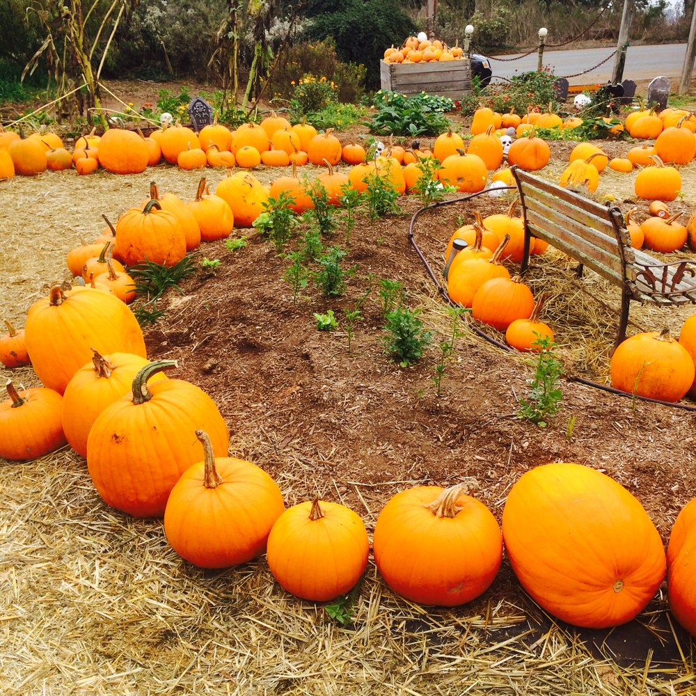 Pumpkin picking at Crystal Bay Farm