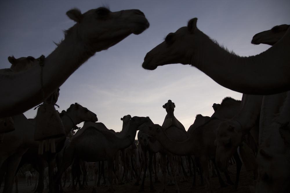 Camel Photo.jpg