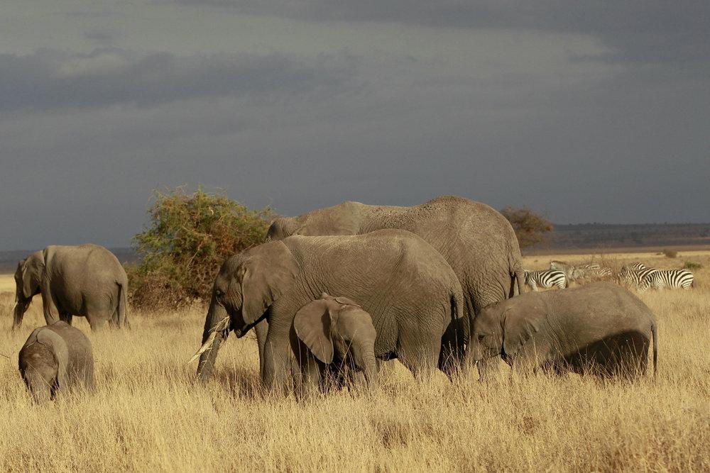 Watch How Drones Keep Elephants Away from Danger in Tanzania -