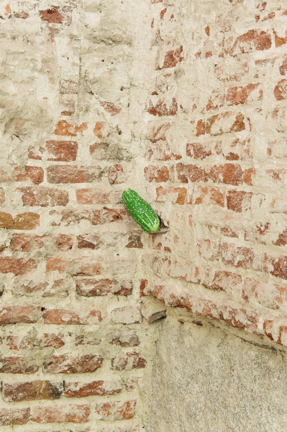 Cucumber5B.jpg