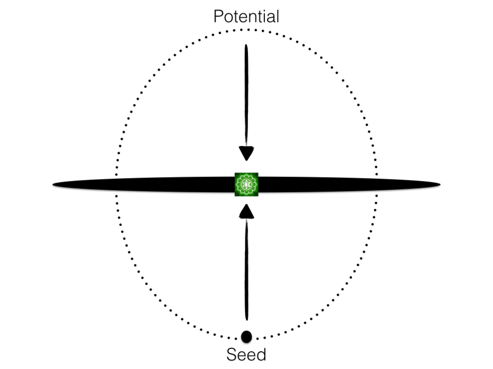 Figure 4: The Seed-Potential Polarity