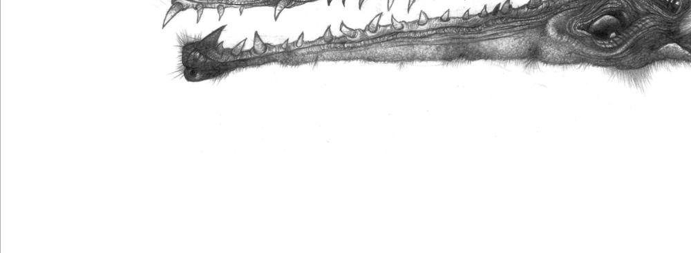 ilustracion2.jpg