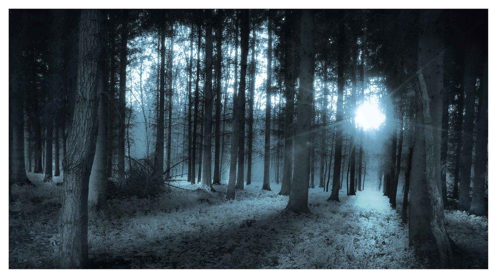 Tree-0071.jpg