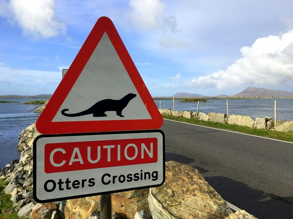 You see more signs about otters than otters. [Name of hill] in the background
