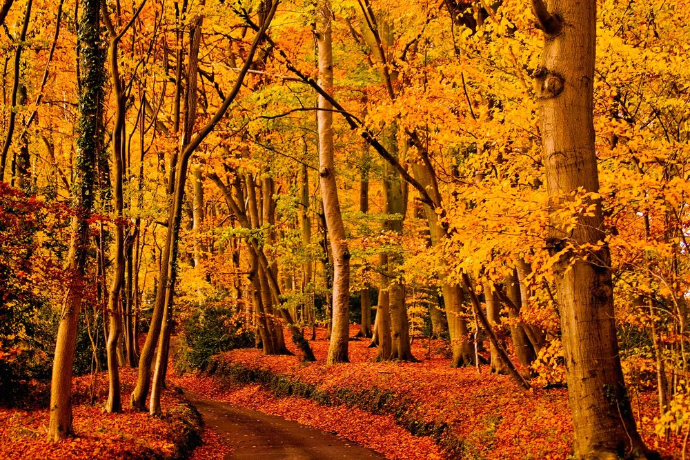 We're not 100% positive but we believe this could be an autumn scene. It's definitely in the Chiltern Hills, England  (Christopher Hotton/Shutterstock)