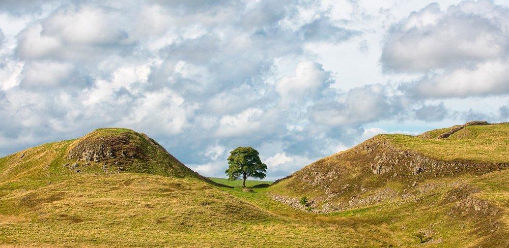 Sycamore Gap, along Hadrian's Wall, Northumberland  (Mark Godden/Shutterstock)