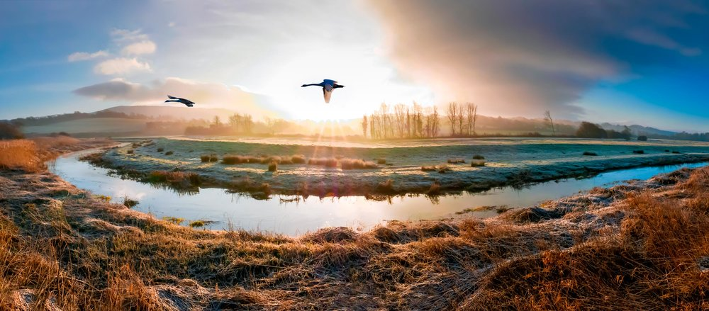 Swans over the River Cuckmere, South Downs  (James LePage/Shutterstock)