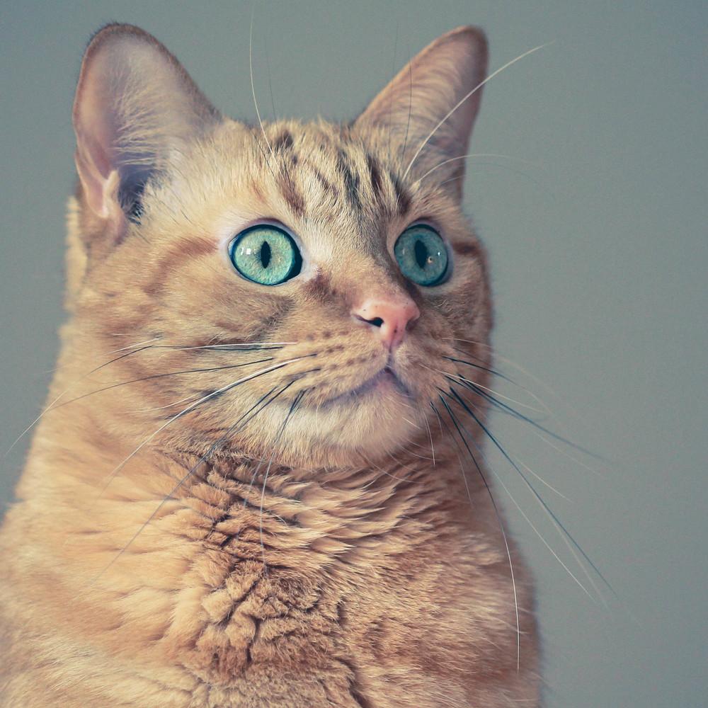 Cat (1 of 1).jpg