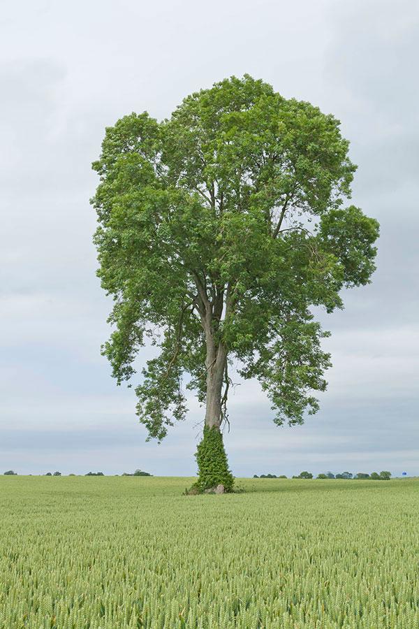 A Tree  2014  Archival pigment print  159cm x 106 cm