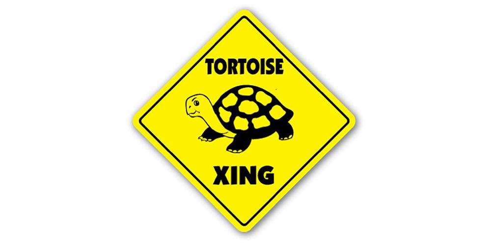 tortoise-crossing-51jSN55qbBL.jpg