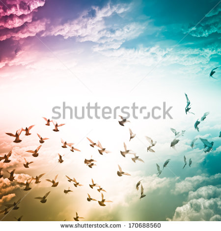 stock-photo-dove-flying-on-blue-sky-freedom-concept-background-170688560_shutterstock.jpg