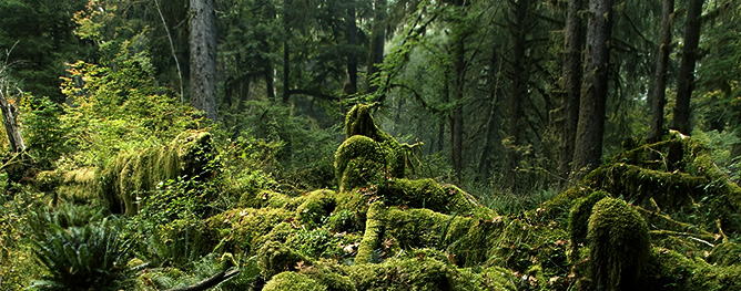 KIC3213-Rain-Forest-Landscape-Hoh-Rain-Forest-Olympic-NP-Washington.jpg