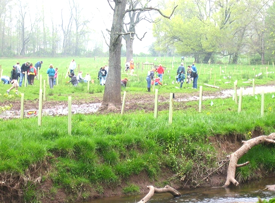 example riparian buffer with seedlings.jpg