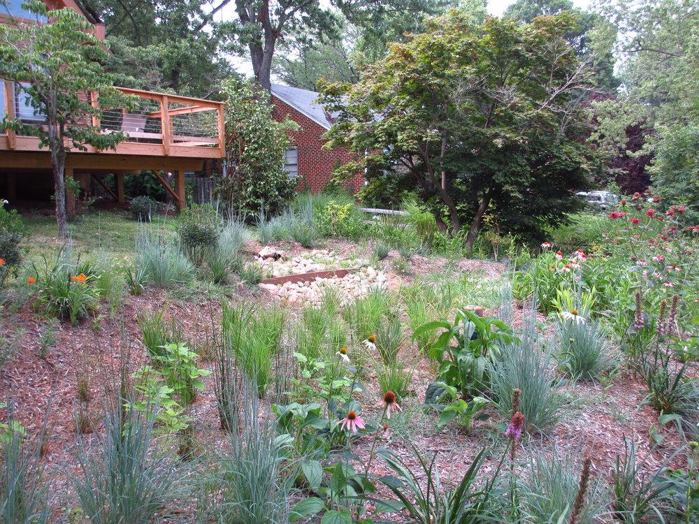 One of Hillsmere's many rain gardens.