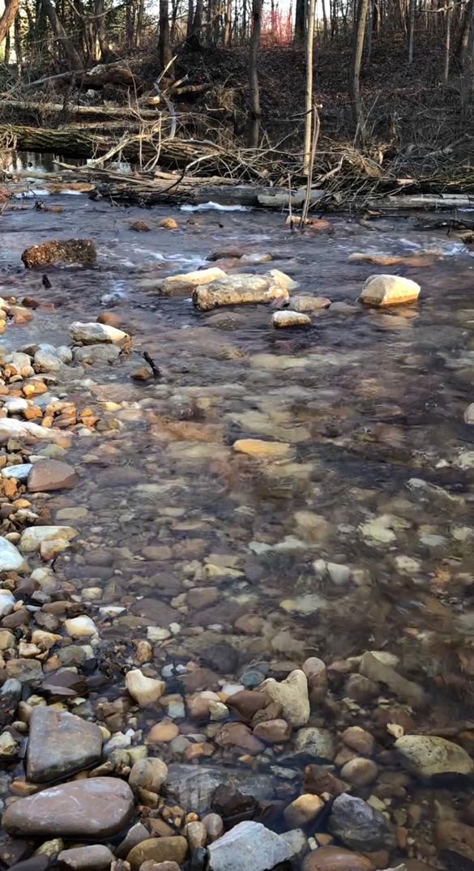 Cattail Creek runs clear after the restoration. Credit: Robert Royer.
