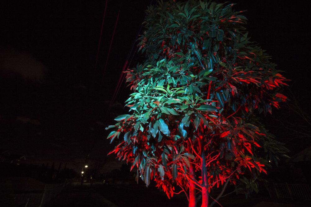 nightflowers-1.jpg