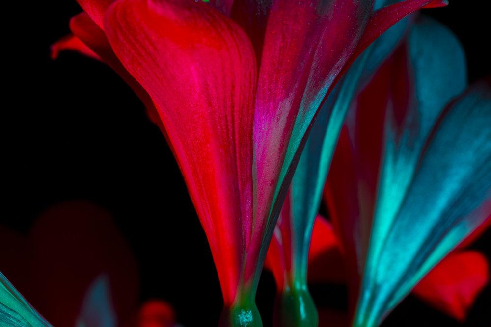 nightflowers-2.jpg