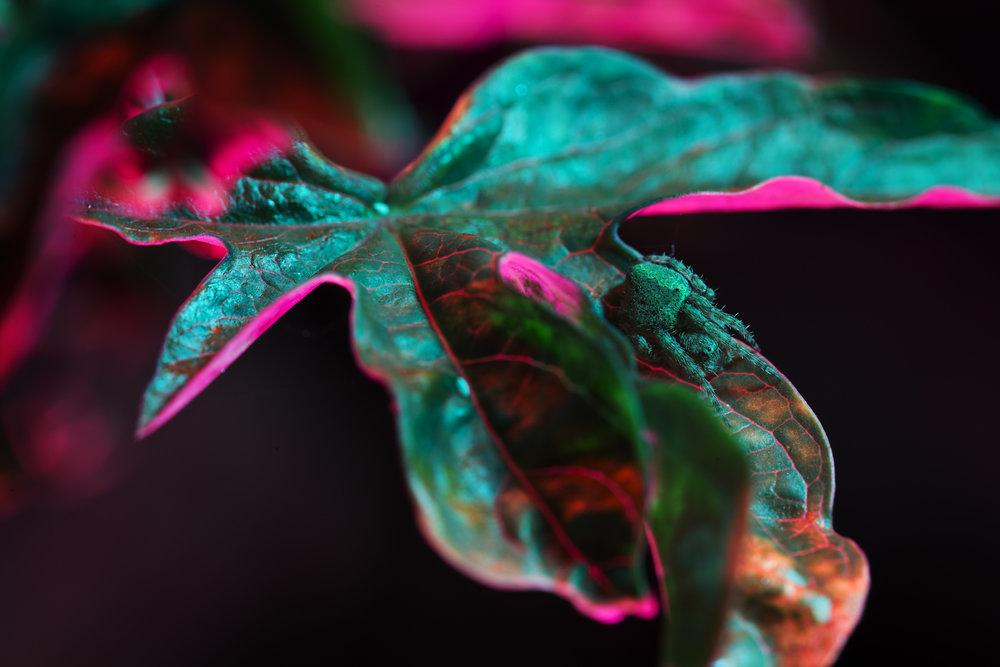 nightflowers-4.jpg